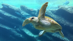 Devon Marine Aquarium