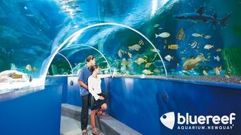 underwater tunnel at the blue reef aquarium newquay