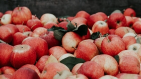 large pile of apples