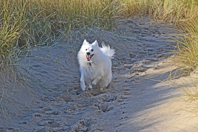 excited dog running along beach