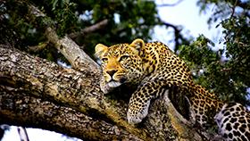Wildlife Park & Gardens