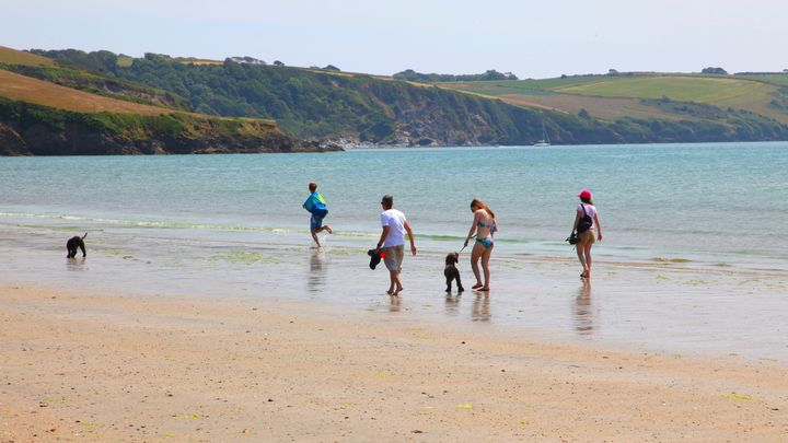 family and dogs playing on the beach