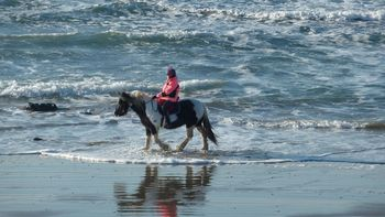 pony trekking in the waves