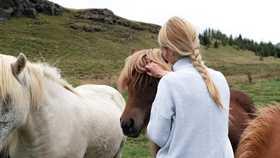 girl tending to shetland ponies