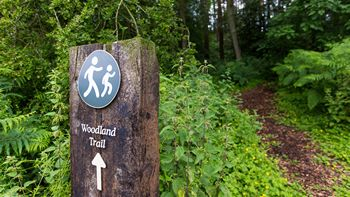 woodland walk sign post in the yorkshire dales
